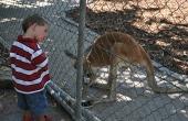 1.1330732885.kangaroo-whisperer